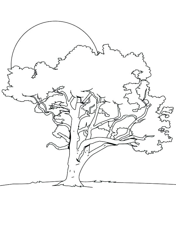 600x776 Bare Tree Coloring Page Trees Coloring Pages Arbor Day Coloring