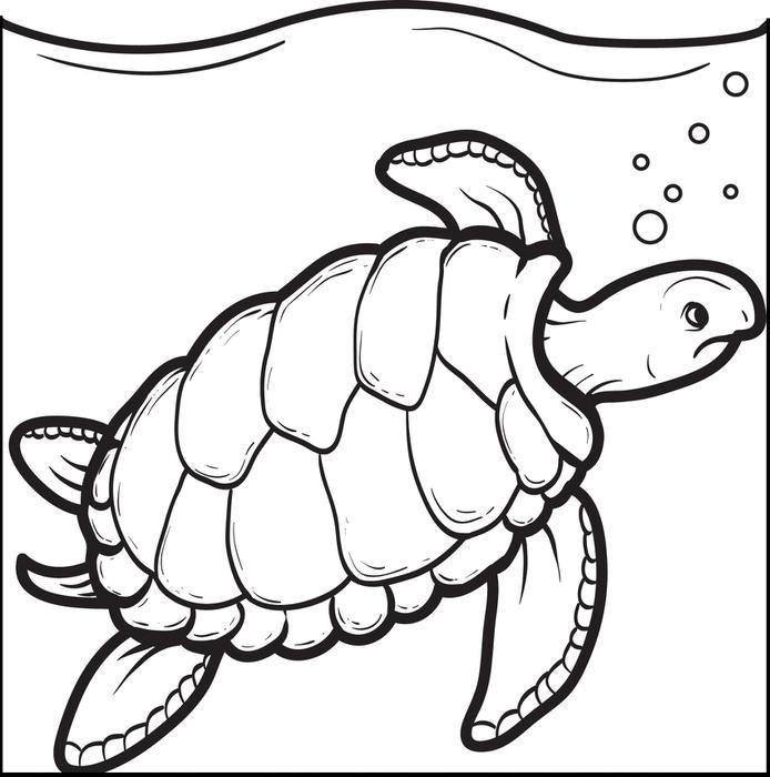 694x700 Swimming Turtle Coloring Page Turtle, Printable Coloring Sheets