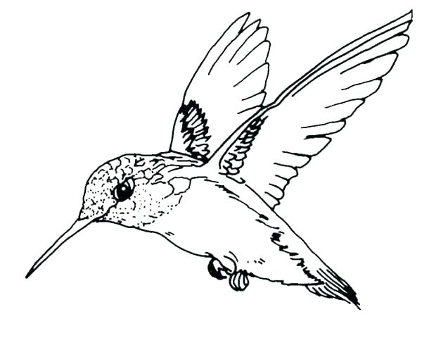 600x480 Robin Bird Coloring Pages Robin Bird On Dead Tree Branch Coloring