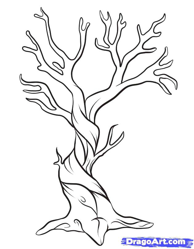 630x810 Tree Template Coloring Page Bare Good For Home Outline