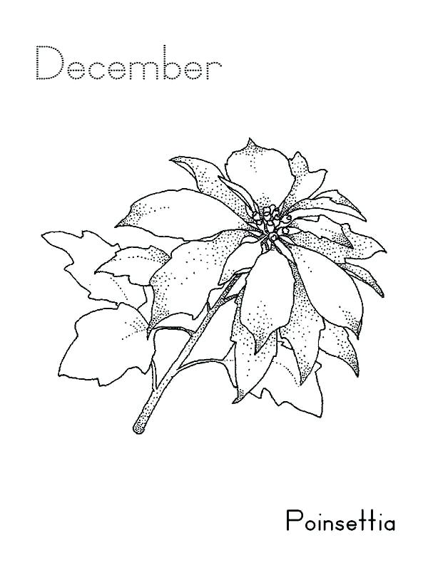 600x800 Poinsettia Coloring Page Color Poinsettia Coloring Page December