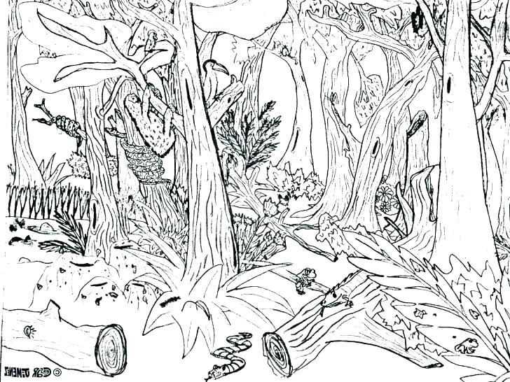 Deciduous Forest Coloring Pages At Getdrawings Com Free For