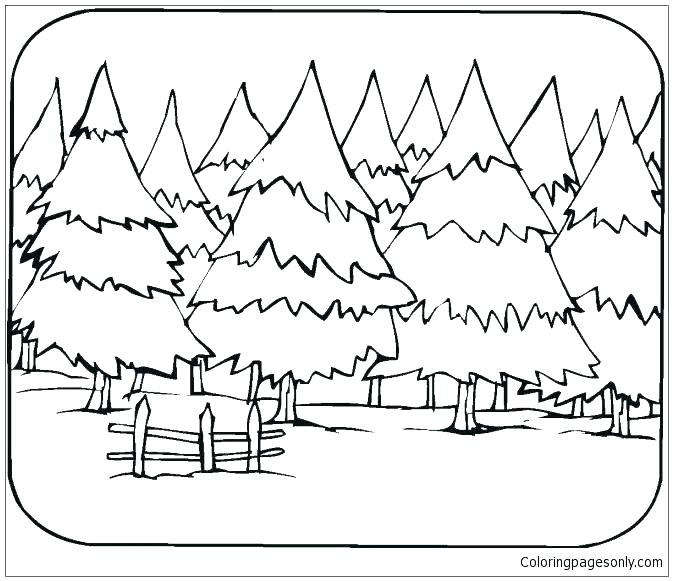 673x581 Forest Colouring Pages Forest Coloring Pictures Deciduous Forest