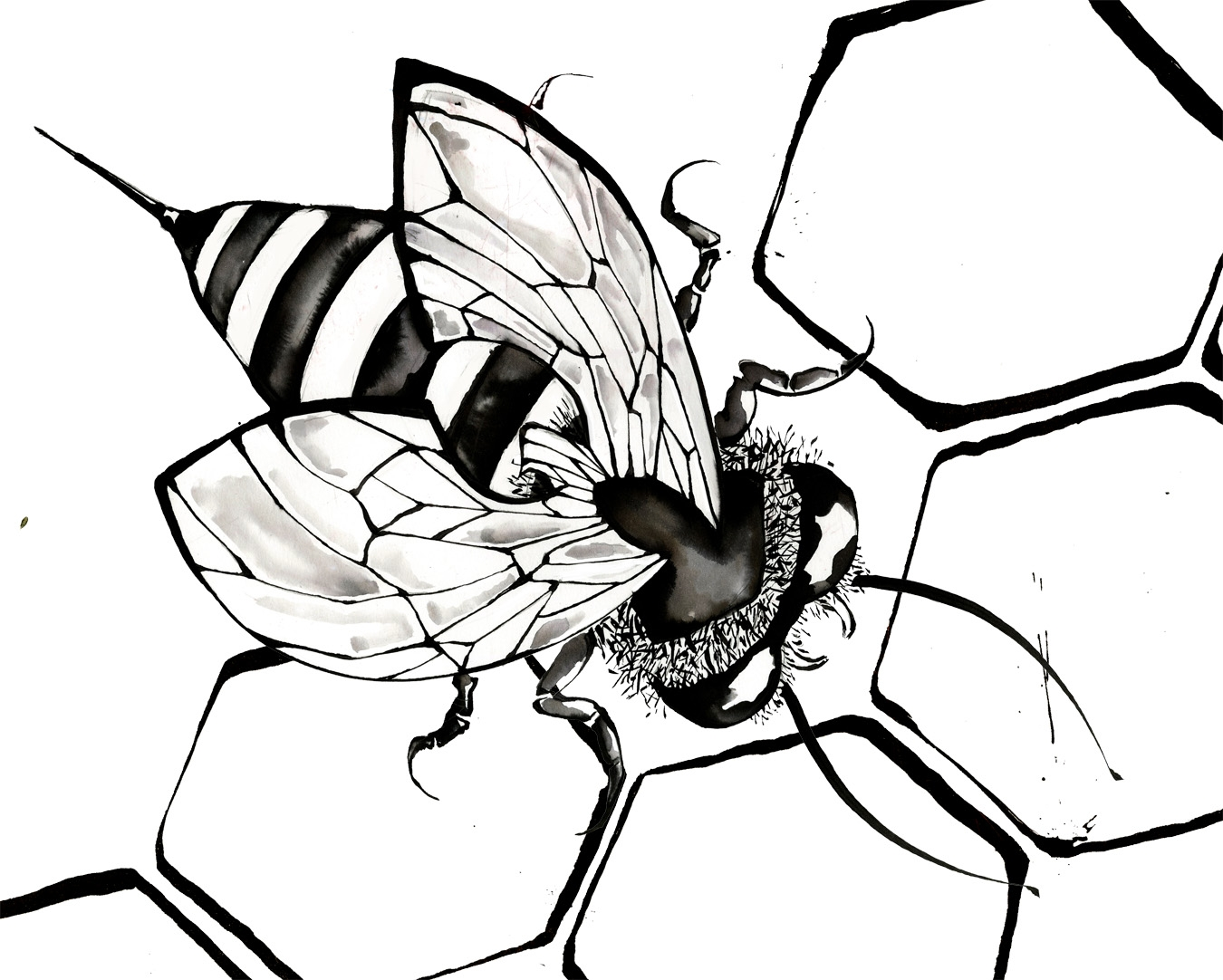 1350x1082 Best Of Honey Bee Page To Color Design Printable Coloring Sheet