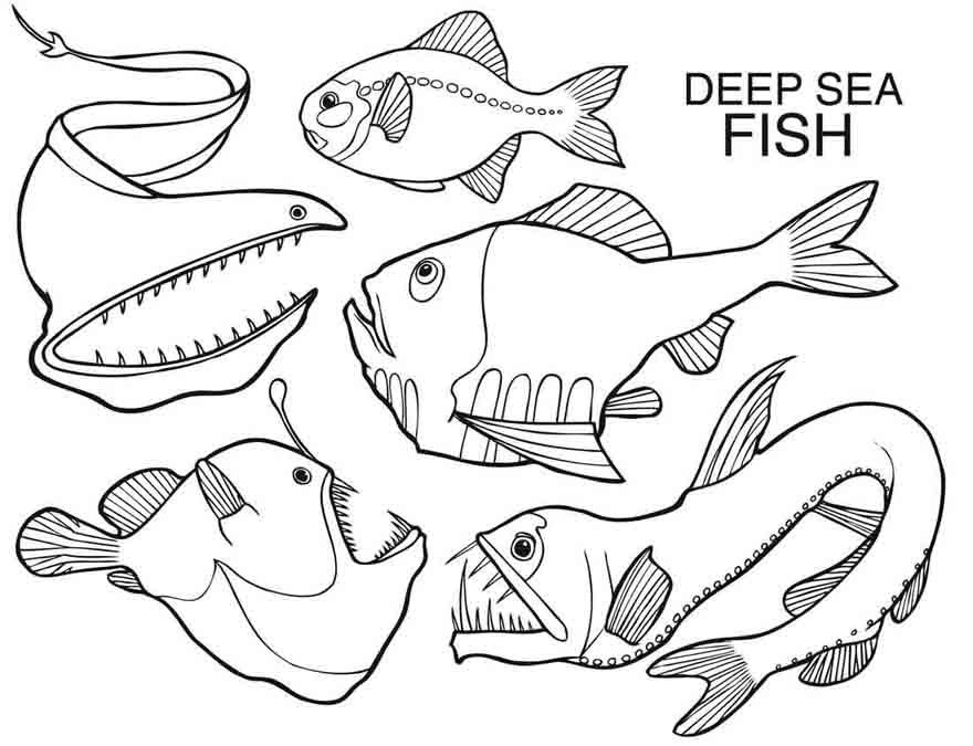 880x675 Deep Sea Fish Creatures Coloring Pages First Grade Ocean Unit