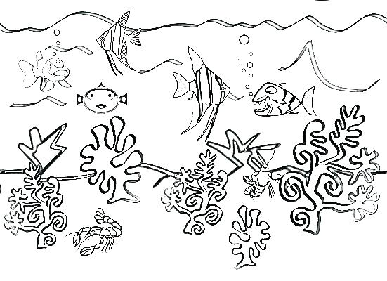 551x400 Free Printable Sea Life Coloring Pages Sea Animal Coloring Pages