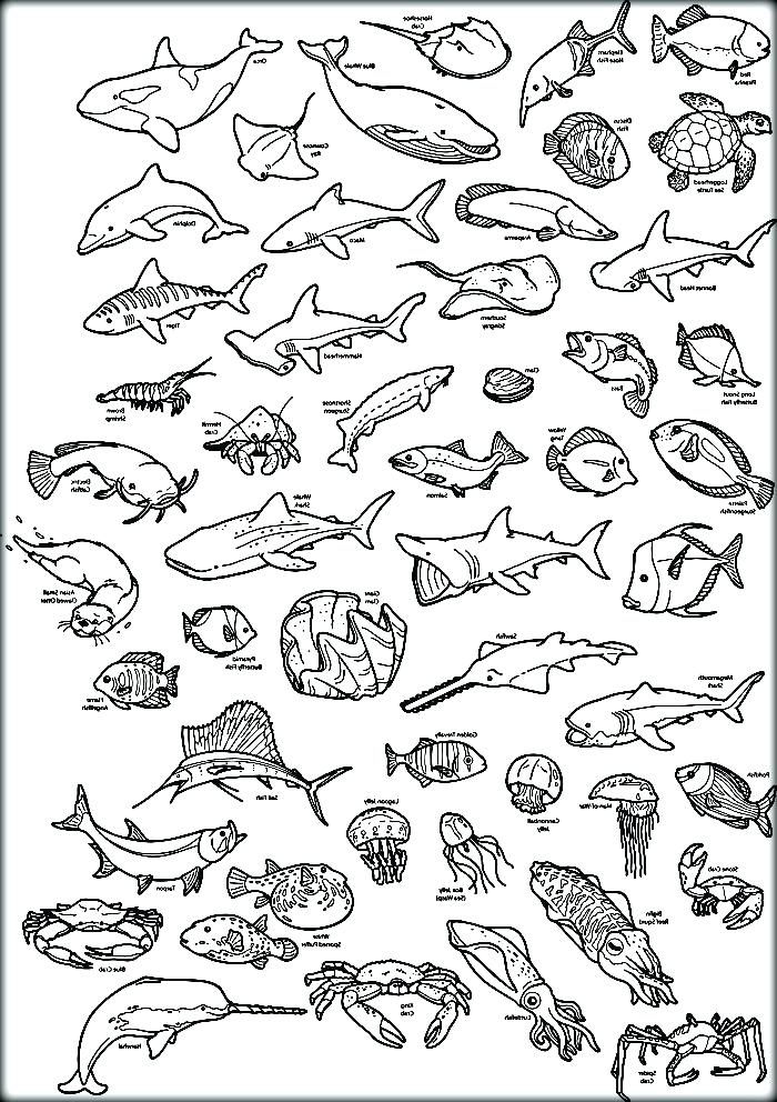 700x992 Ocean Animals Coloring Pages Ocean Animals Coloring Pages