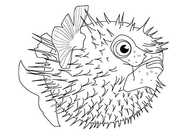 600x450 Sea Creature Coloring Pages Images Of Deep Sea Creatures Coloring