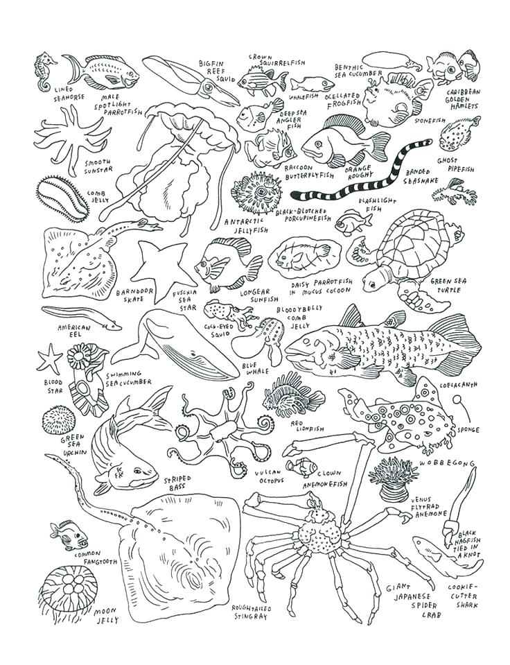 736x959 Deep Sea Coloring Pages Sea Monster Coloring Pages Best Of Sea