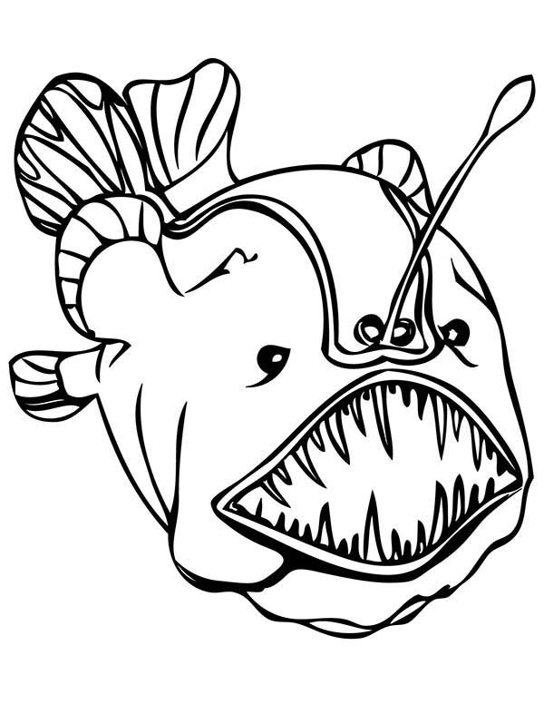 600x776 Deep Sea Creatures Coloring Pages Coloring Pages