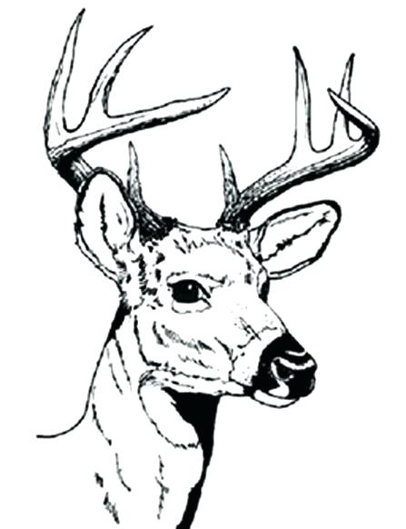 447x582 Deer Coloring Page Gator Coloring Pages Deer Coloring Pages Deer