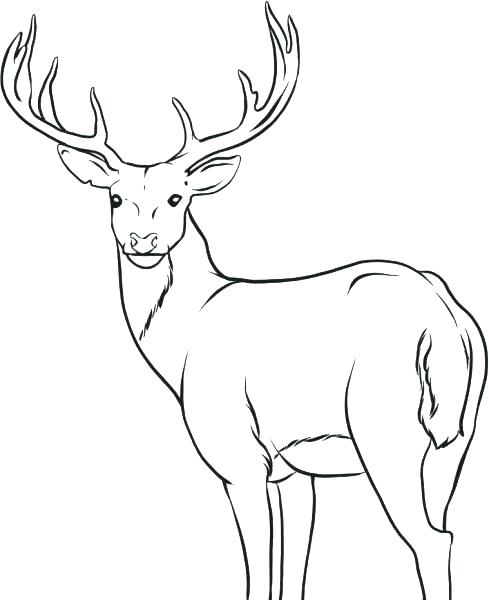 489x600 Deer Coloring Pages Deer Coloring Pages Top For Your Little Ones