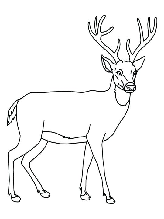 540x720 Deer Coloring Pages Easy Download Easy Deer Coloring Pages