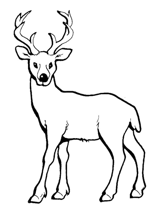 521x701 Baby Deer Coloring Pages Deer With Long Horn Coloring Pages