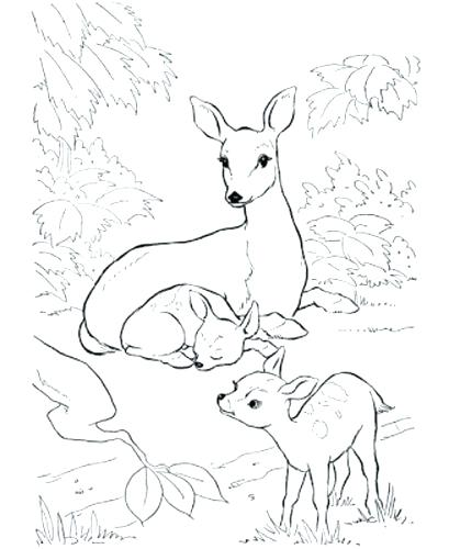 409x500 Coloring Pages Deer Coloring Page Baby White Tailed Pages Deer