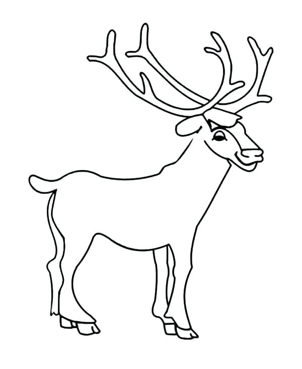 600x733 Coloring Pages Deer Coloring Pages Deer Coloring Page Deer