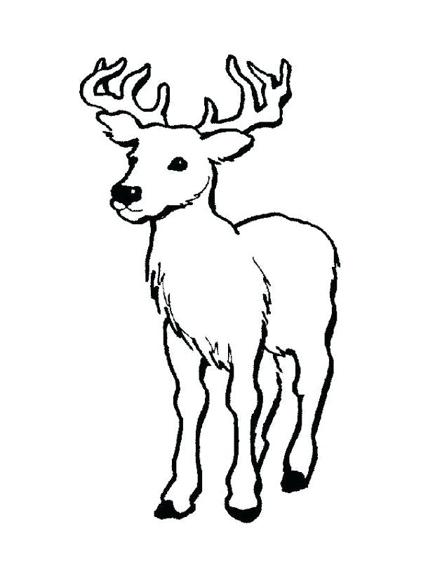 Deer Buck Coloring Pages At Getdrawings Com Free For Personal Use