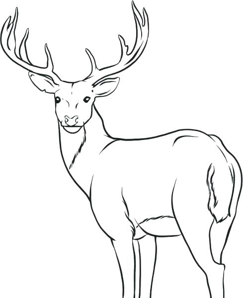 489x600 Whitetail Deer Coloring Pages Deer Coloring Picture The Incredible