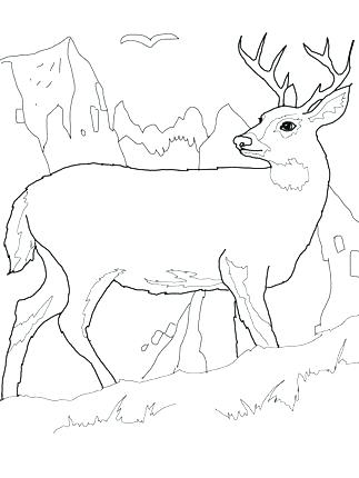 323x430 Whitetail Deer Coloring Pages Whitetail Deer Coloring Pages Deer