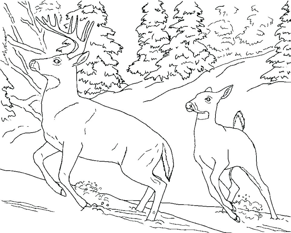 960x768 Buck Coloring Pages Whitetail Buck Coloring Page Deer Pages Buck