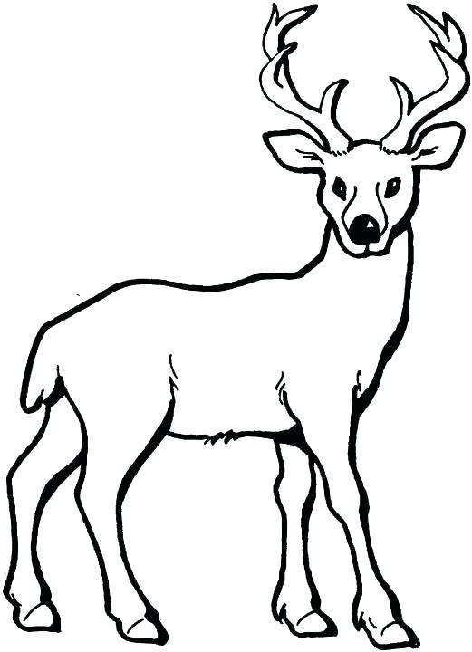 521x720 Deer Head Coloring Pages John Coloring Sheets John Gator Coloring