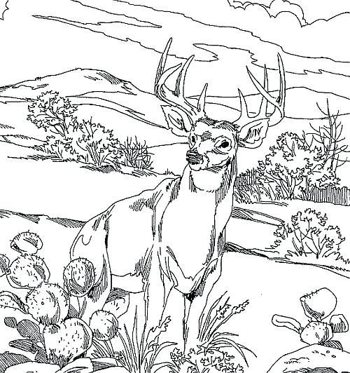 500x532 Deer Hunting Coloring Pages Printable Deer Coloring Pages Deer