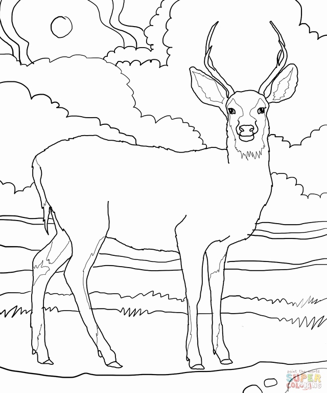 640x768 Realistic Reindeer Coloring Pages Pics Whitetail Deer Coloring