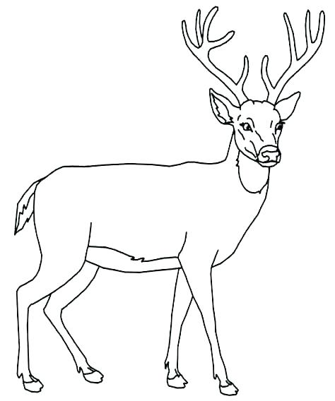 474x568 White Tailed Deer Coloring Page Deer Coloring Pages Whitetail Deer