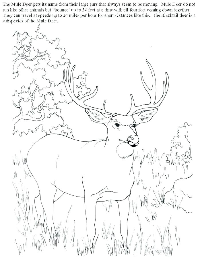 704x899 Bow Hunter Coloring Page Kids Coloring Deer Hunting Coloring Pages