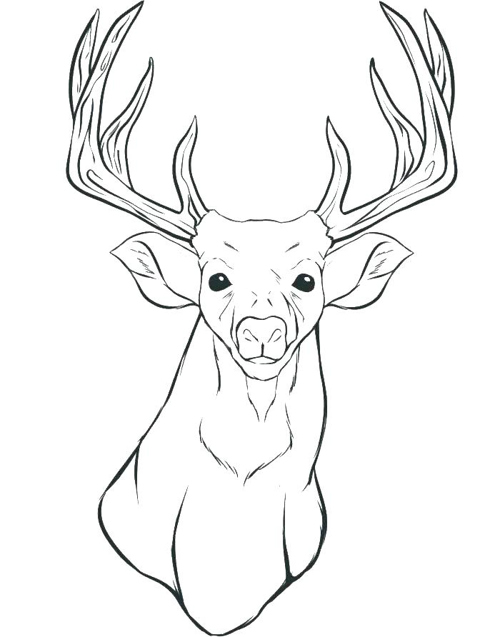 700x892 Deer Coloring Page Excellent Er Coloring Page Online Pages