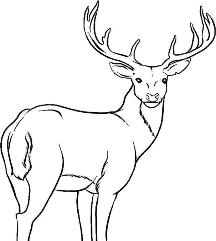 690x772 Deer Coloring Pages Deer Coloring Pages Deer Drawing Deer Print