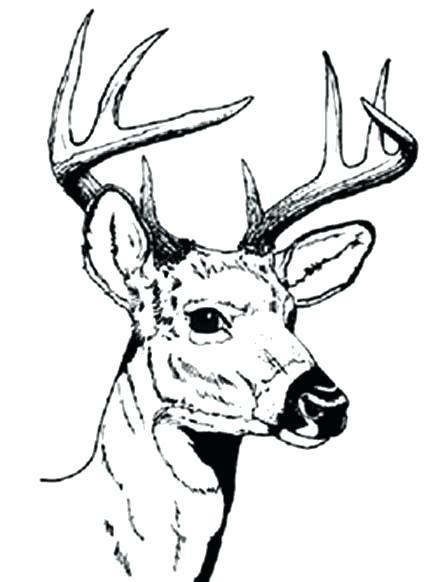 447x582 Deer Hunting Coloring Pages Deer Color Pages Free Deer Coloring