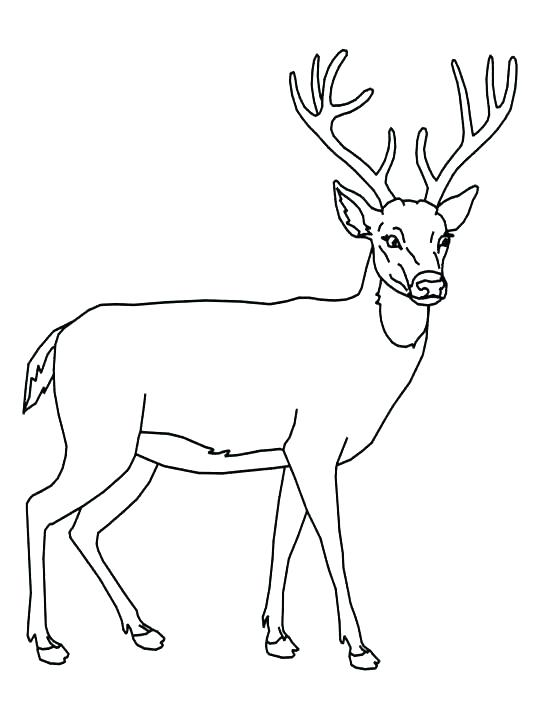 540x720 Deer Hunting Coloring Pages Deer Coloring Pages For Adults Hunting