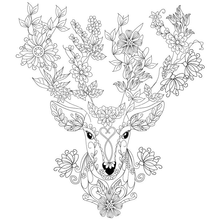 709x709 Deer Coloring Page Design Ms Tattoos
