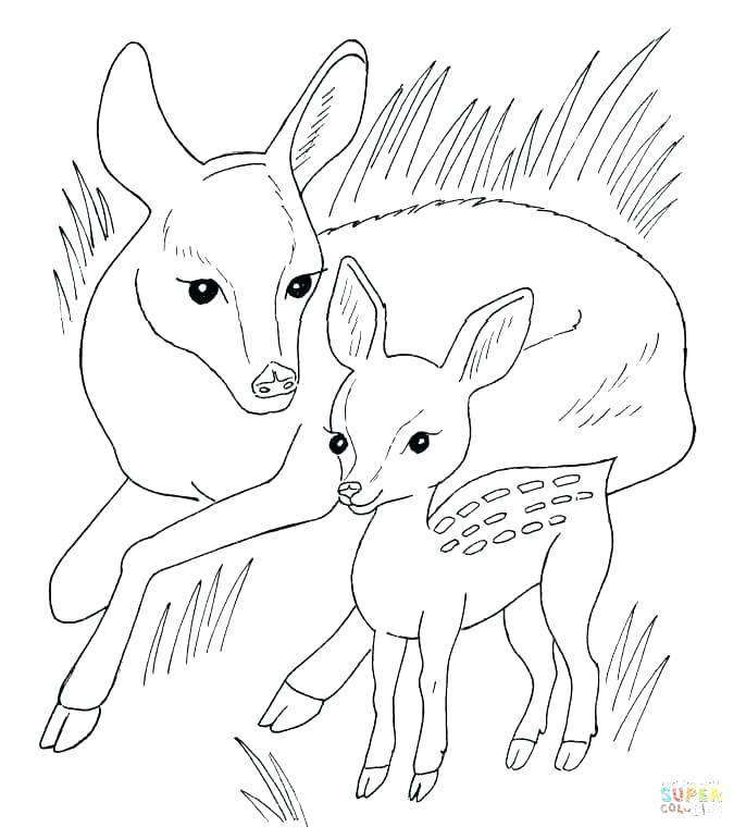 686x771 Free Deer Coloring Pages Baby Deer Coloring Pages Baby Animals