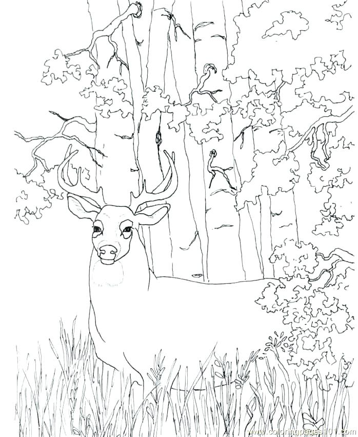 698x852 Washington Monument Coloring Page Deer Coloring Pictures To Print