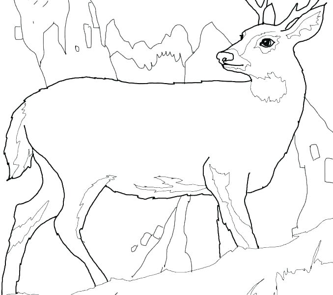 678x600 White Tailed Deer Coloring Page Whitetail Deer Coloring Pages