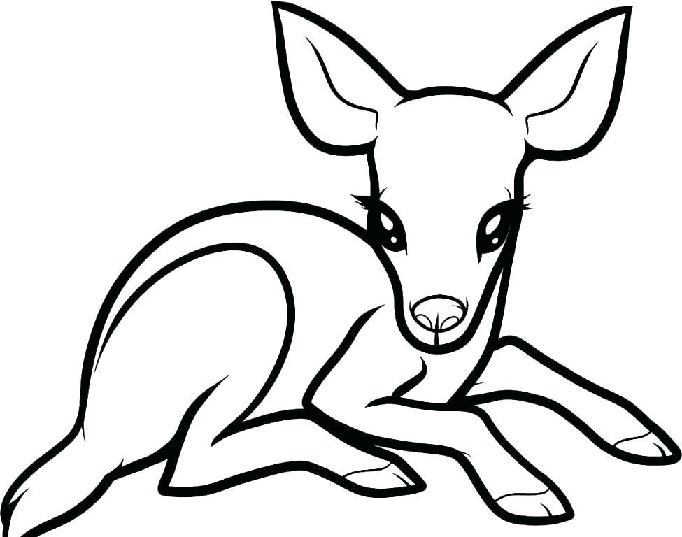 975x768 Deer Printable Coloring Pages
