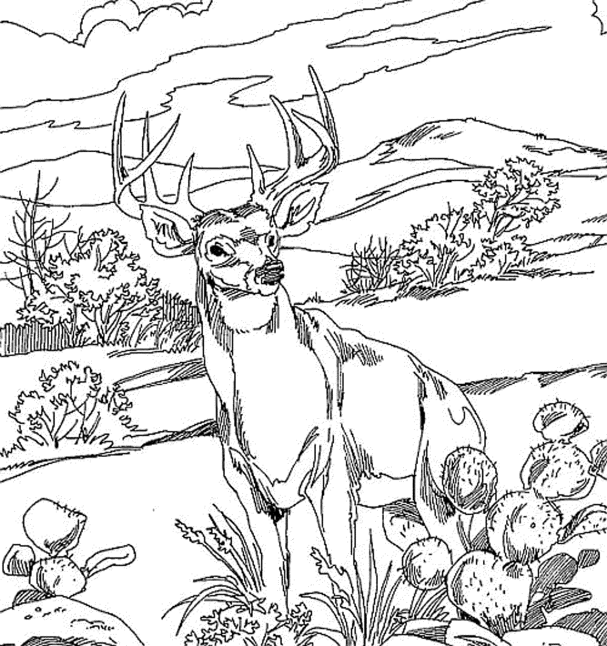2000x2128 Realistic Deer Coloring Pages