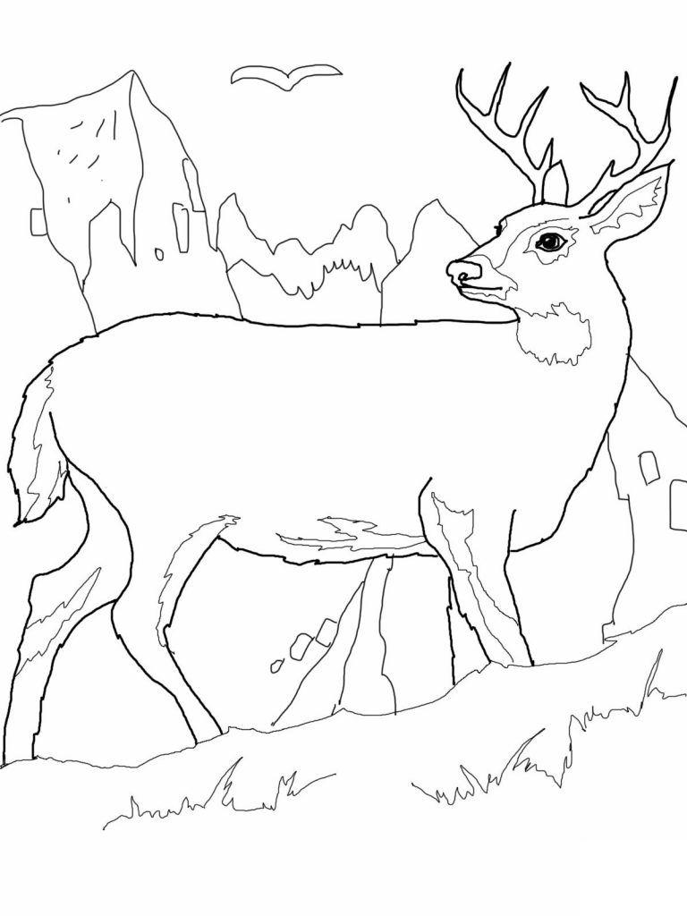 768x1024 Deer Coloring Sheet