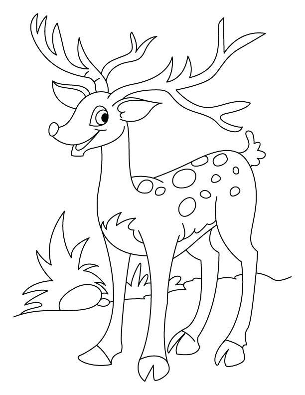 612x792 Deer Hunting Color Pages Kids Coloring Happy Deer Coloring Page