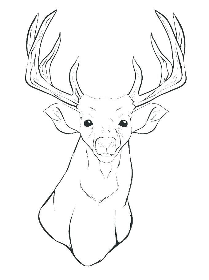 680x911 Deer Hunting Coloring Pages Deer Coloring Pages Baby Hunting