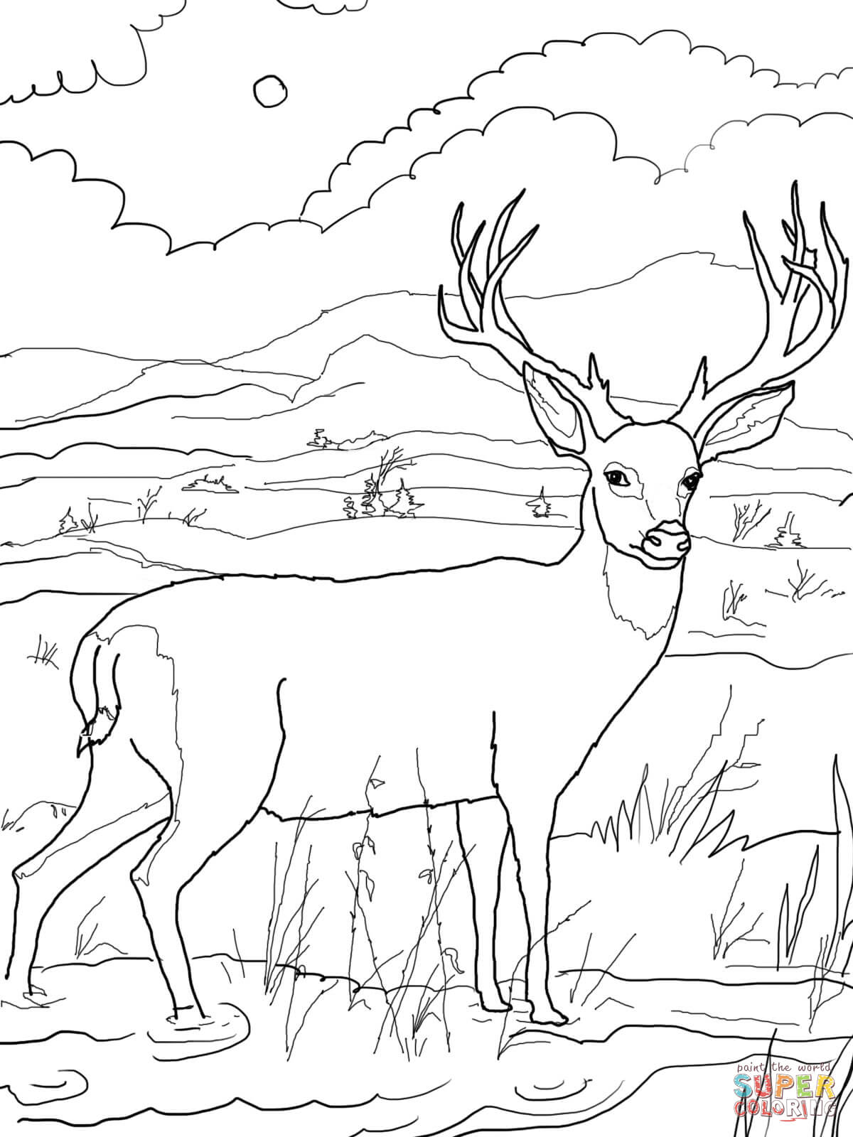 1200x1600 Fortune Deer Colouring Pages Blacktail Mule Co