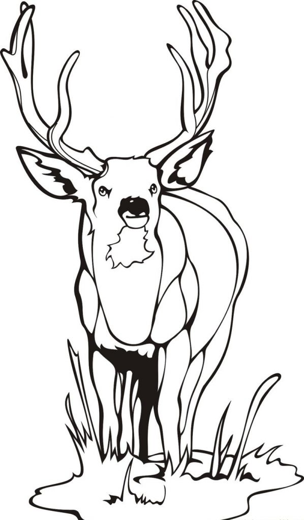 598x1024 Printable Deer Pictures