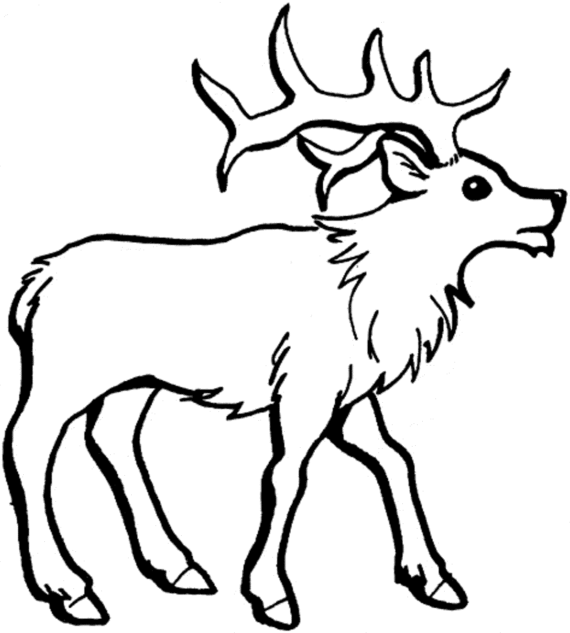 2000x2220 Unique Deer Page To Color Collection Printable Coloring Sheet