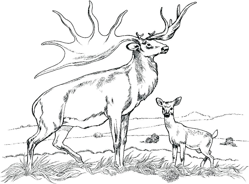 1024x756 Printable Deer Coloring Pages For Adults