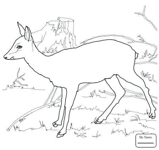 532x500 Deer Coloring Pages Medium Size Of Deer Coloring Page Printable