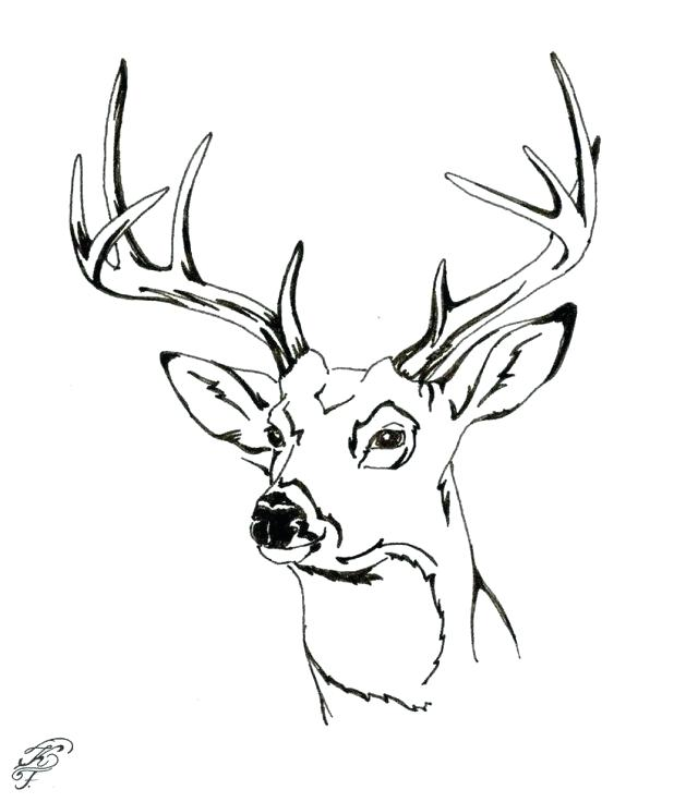 618x736 Deer Coloring Picture Beautiful Unique Deer Head Coloring Pages