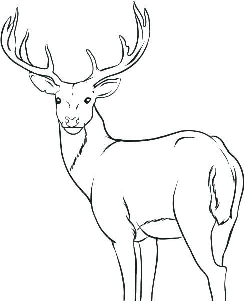 489x600 Deer Hunting Coloring Pages Deer Hunting Symbols Deer Hunting