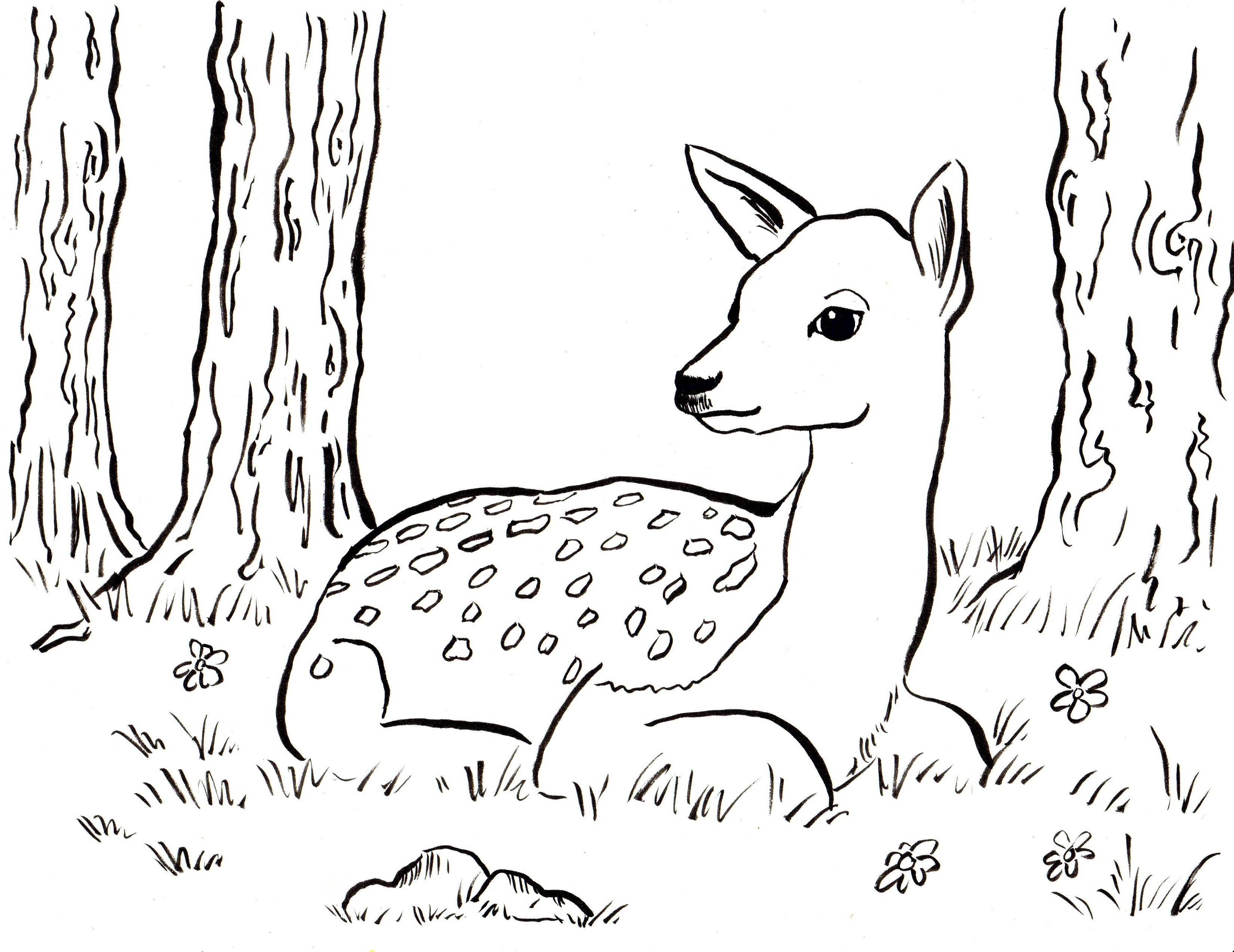 3300x2545 Reindeer Animal Coloring Pages Easy Coloring Pages Printable
